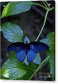 Butterfly Place Acrylic Print
