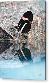 Butterfly Reflection Acrylic Print