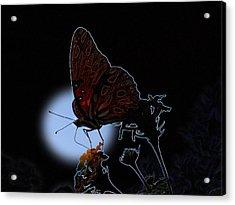 Butterfly Acrylic Print by Rick McKinney