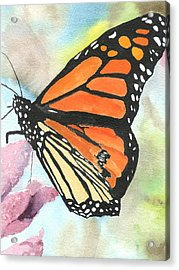 Butterfly Acrylic Print by Robert Thomaston