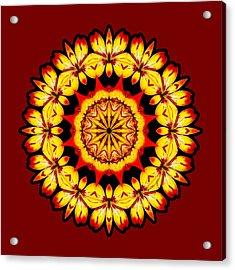 Butterfly Sun Acrylic Print