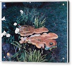 Butterfly Table Acrylic Print by Lionel Larkin