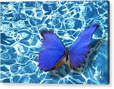 Butterfly Acrylic Print by Tony Cordoza