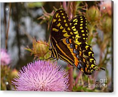Butterfly Visit Acrylic Print by Tom Claud