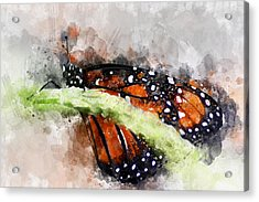 Butterfly Watercolor Acrylic Print