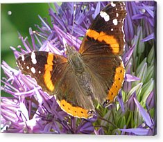 Butterfly With Allium Acrylic Print by Alfred Ng