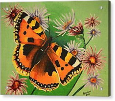 Butterfly With Asters Acrylic Print