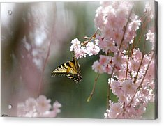 Butterfly With Misty Pink Acrylic Print by Molly Dean