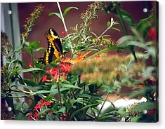 Butterfly World Watercolor 2 Acrylic Print by Steve Ohlsen