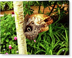 Butterfly's Eyes Acrylic Print