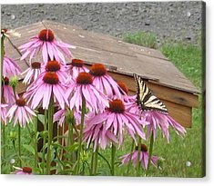 Butterfly's Lunch Acrylic Print by Barb Morton