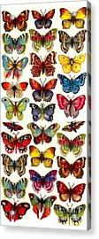 Butterflys Acrylic Print by Pg Reproductions