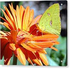 Butters Acrylic Print