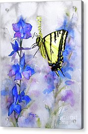 Butteryfly Delight Acrylic Print by Bonnie Rinier