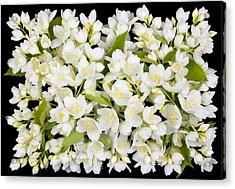 Buttonhole From White  Jasmine Flowers Acrylic Print by Aleksandr Volkov