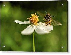 Buzz Off Acrylic Print