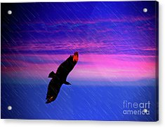 Acrylic Print featuring the photograph Buzzard In The Rain by Al Bourassa