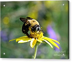 Buzzing By Acrylic Print by Christy Ricafrente