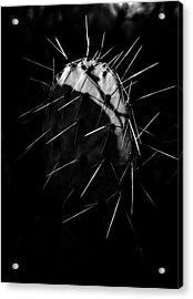 Bw Cactus Thorns Acrylic Print