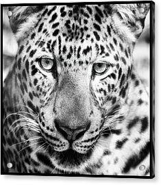 Bw Leopard Acrylic Print