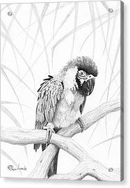 Bw Parrot Acrylic Print