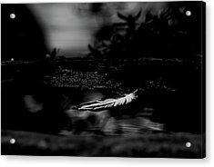 Floating On A Still Pond - Bw Acrylic Print by Marilyn Wilson