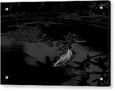 Becoming Weightless - Bw Acrylic Print by Marilyn Wilson