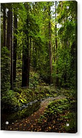 By The Stream In Muir Woods Acrylic Print