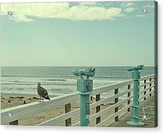 Ca Peepers Acrylic Print by JAMART Photography
