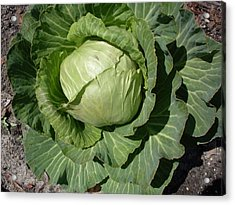 Cabbage Head Acrylic Print by Warren Thompson