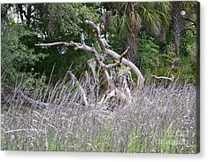 Acrylic Print featuring the photograph Cabbage Palms And Driftwood by Carol  Bradley