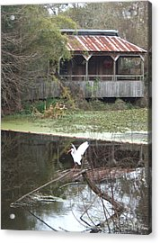 Cabin On The Bayou Acrylic Print