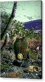 Acrylic Print featuring the photograph Cacti by Lori Seaman