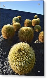Cacti On The Roof Acrylic Print