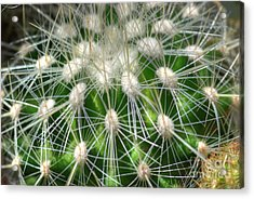 Acrylic Print featuring the photograph Cactus 1 by Jim and Emily Bush