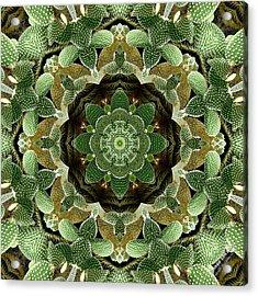 Cactus 1361k8 Acrylic Print