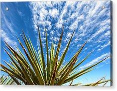 Cactus And Blue Sky Acrylic Print by Amyn Nasser