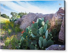 Cactus And Granite    9234 Acrylic Print by Fritz Ozuna