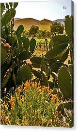 Cactus And Poppies Acrylic Print