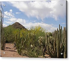 Acrylic Print featuring the photograph Cactus And Sand by Jeanette Oberholtzer