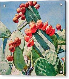 Cactus Apples Acrylic Print