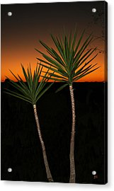 Cactus At Sunset Acrylic Print by Julie Reyes
