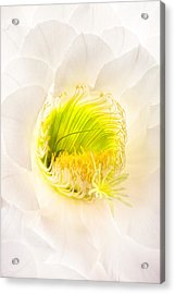 Cactus Bloom Number Five Acrylic Print