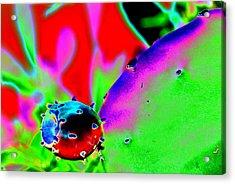 Cactus Bud Acrylic Print by Peter  McIntosh