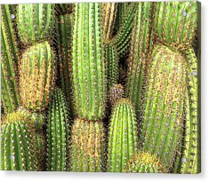 Cactus City Acrylic Print