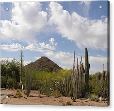 Acrylic Print featuring the photograph Cactus Country by Jeanette Oberholtzer