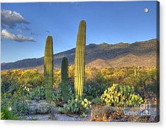 Cactus Desert Landscape Acrylic Print