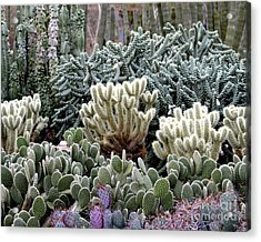 Cactus Field Acrylic Print