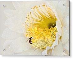 Acrylic Print featuring the photograph Cactus Flower Diner No. 2 by Joe Bonita
