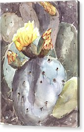 Acrylic Print featuring the painting Cactus Flower by Marilyn Barton